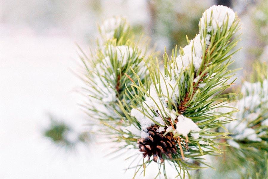оформление зимней свадьбы 14
